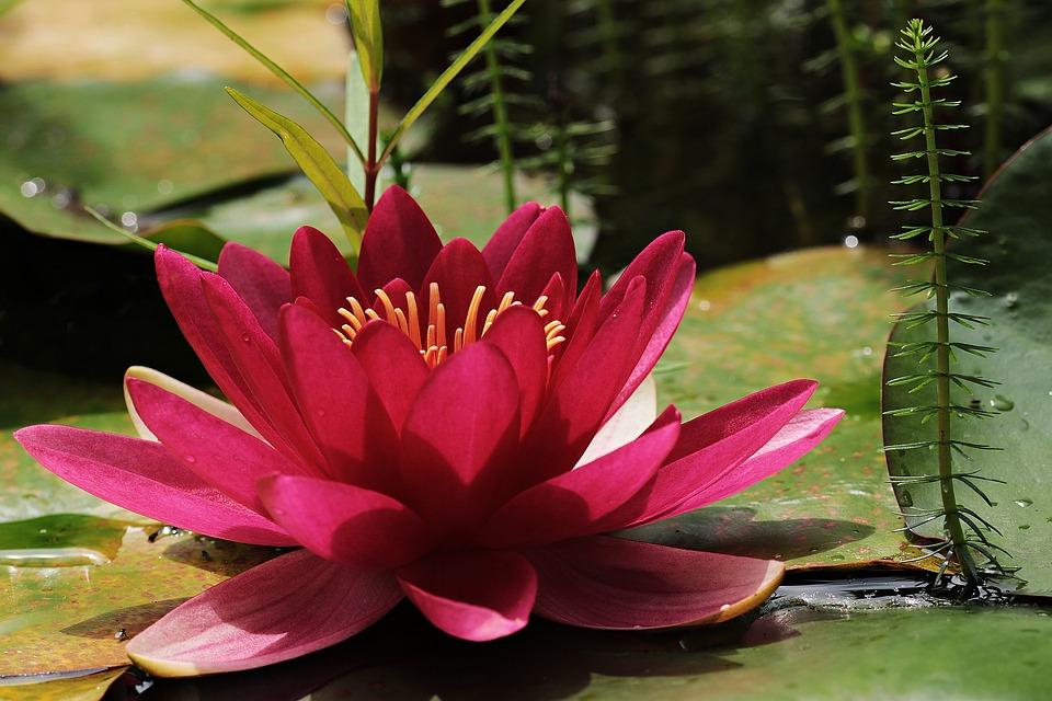 pink flower, patience, hidden, within